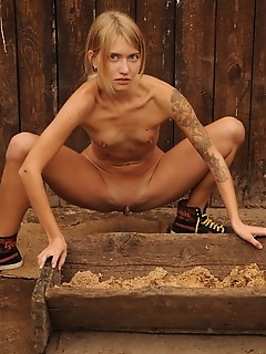 Nudity among pigs